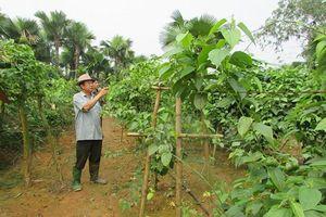 XDNTM ở Thái Hòa: Đi vào chiều sâu, theo hướng thiết thực