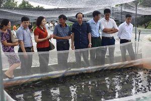 Kỷ niệm 60 năm ngày truyền thống ngành thủy sản (1/4/1959 - 1/4/2019): Nuôi trồng thủy sản Hà Nội bứt phá