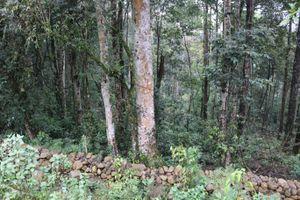 Tỉ lệ che phủ rừng toàn quốc đạt 41,65%
