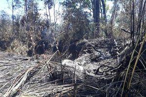 Hạn hán người dân điêu đứng vì rừng cháy, tiêu chết