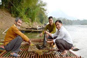 Tuyên Quang: Nuôi nhốt những loài 'thủy quái' trong lồng, thu hàng trăm triệu