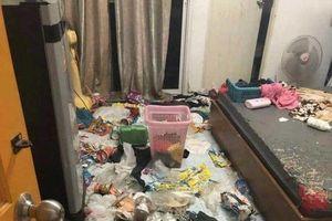Cô gái nuôi 3 chú mèo rồi bỏ đói, 'bùng' tiền nhà và để lại bãi rác lớn khiến chủ nhà 'vừa dọn dẹp vừa luôn miệng chửi'