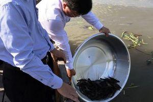 Kiên Giang: Thả hàng chục ngàn con giống xuống sông Cái Lớn tái tạo nguồn lợi tự nhiên