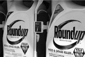 Glyphosate, loại chất diệt cỏ bị nghi kỵ toàn cầu