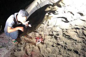 Kinh hoàng em bé 7 tuổi bị đàn chó 10 con tấn công ở Hưng Yên, nhập viện trong tình trạng nguy kịch
