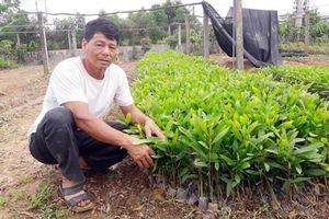 Trại bò nghìn tỉ bỏ hoang tại Hà Tĩnh: Dân ồ ạt chiếm dụng đất