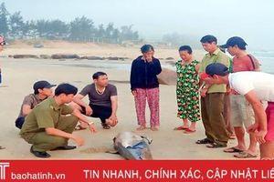Cá voi hơn 80kg chết trôi dạt vào bờ biển Kỳ Xuân
