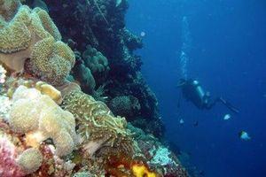 Indonesia và Mỹ công bố các khu bảo tồn biển mới ở Bắc Maluku