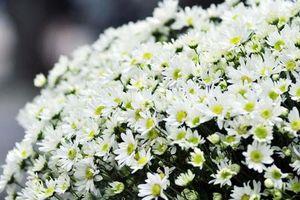 Những bài thuốc Đông y trị viêm kết mạc mùa xuân
