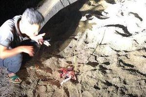 Bé trai 7 tuổi bị đàn chó cắn nhập viện trong tình trạng nguy kịch