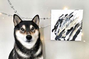Chú chó vừa có tài, sắc, vẽ tranh bán được cả nghìn đô