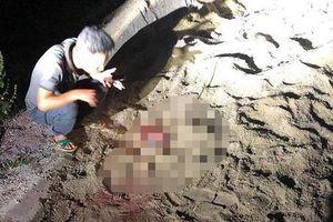 Kinh hoàng bé trai 7 tuổi bị đàn chó 10 con lao vào cắn xé nhập viện trong tình trạng nguy kịch