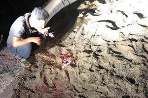 Bé 7 tuổi bị bầy chó 10 con tấn công gây nguy kịch