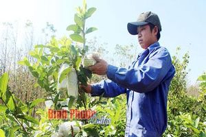 Bình Phước: Có 1 ha vườn trồng 'lung tung' thôi mà 9X lời 1,5 tỷ/năm