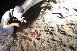 Kinh hoàng cháu bé 7 tuổi bị đàn chó cắn trọng thương