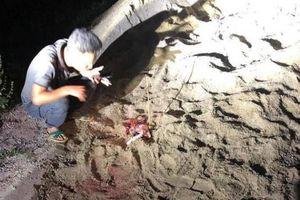 Hưng Yên: Bé trai 7 tuổi bị đàn chó cắn đến tử vong