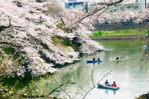 7 điểm ngắm hoa anh đào đẹp nhất ở Tokyo, Nhật Bản