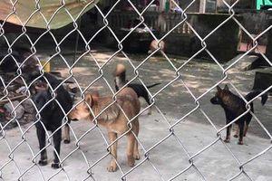 Khó xử hình sự vụ đàn chó cắn chết bé trai 7 tuổi ở Hưng Yên