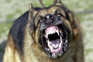 100% ca bệnh dại đều tử vong do sai lầm nguy hại khi bị chó cắn
