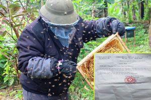 Đàn ong bị 'cưỡng chế' khỏi địa phương: Chủ tịch UBND xã nêu lý do