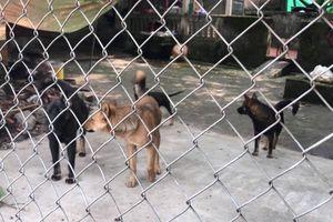 Đàn chó cắn chết bé 7 tuổi ở Hưng Yên: Người dân khiếp sợ đàn chó