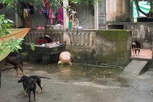 Thông tin bất ngờ vụ cháu bé bị chó cắn tử vong ở Hưng Yên