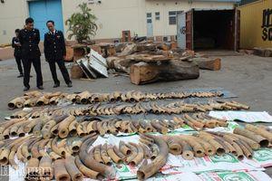 Doanh nghiệp 'ma' trong vụ nhập lậu ngà voi tại Hải Phòng
