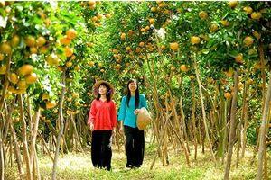 Đến An Giang để trải nghiệm du lịch nông nghiệp sạch