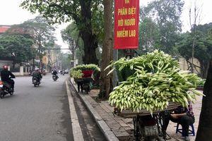 Mùa hoa loa kèn gọi tháng Tư về khắp các con phố Hà Nội