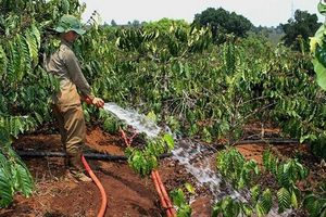 Chủ động chống hạn từ đầu mùa khô
