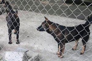 Bất ngờ số phận đàn chó cắn bé 7 tuổi tử vong