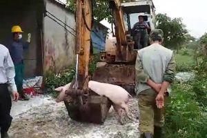 Dịch tả lợn châu Phi đã có hàng trăm năm, vì sao chưa có vắc xin?