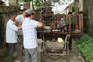 Đàn chó cắn chết bé trai ở Hưng Yên từng tấn công nhiều người và vật nuôi