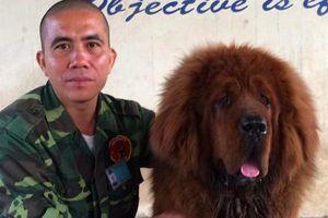 HLV chuyên nghiệp tiết lộ cách xử lý, thoát thân đơn giản nhất khi bị chó dữ tấn công