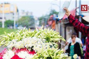 Hà Nội ngây ngất trước vẻ đẹp của hoa loa kèn những ngày tháng 4