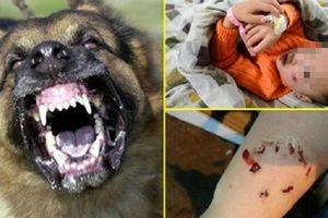 Phải tăng nặng hình phạt mới giảm các vụ chó cắn người