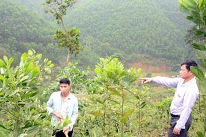 Tuyên Quang: Hiệu quả lớn từ những vườn keo lai cấy mô