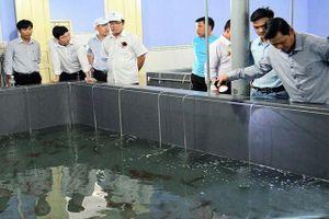 Kiên Giang: Tích cực phòng chống dịch bệnh trên gia súc, gia cầm và thủy sản