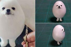 'Chú chó hình quả trứng' Pom Pom khiến dân mạng phát cuồng