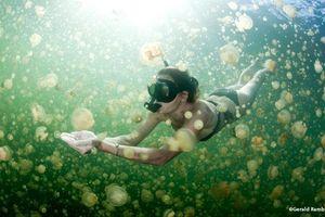 Bơi cùng hàng triệu con sứa quý hiếm ở Palau