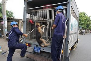 Khởi đầu phong trào bắt chó thả rông, TPHCM giờ còn đội nào hoạt động?