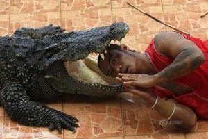 Rùng rợn người đàn ông thò đầu vào miệng cá sấu 'quái vật'