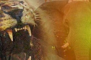 Săn tê giác trái phép, người đàn ông bị voi dẫm chết, sư tử ăn thịt