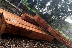 Vận chuyển gỗ trái phép bị phạt 50 triệu đồng