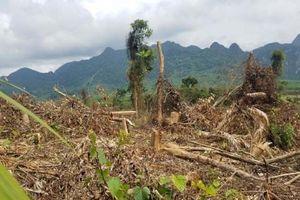 Rừng Quảng Bình tiếp tục 'chảy máu'