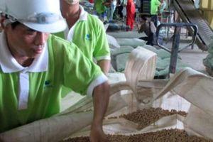 Việt Nam mong được hỗ trợ gì từ đất nước 'nuôi được cả thế giới'?