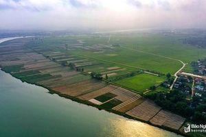 Bức tranh yên bình của đồng bãi xanh mướt bên dòng Lam
