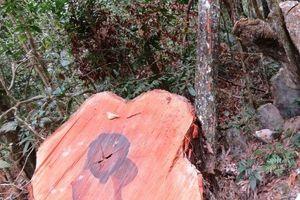 Khởi tố vụ phá rừng nghiêm trọng tại VQG Phong Nha – Kẻ Bàng