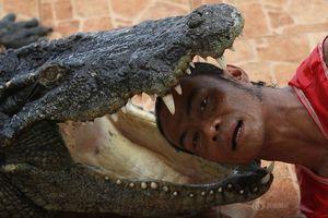 Cận cảnh diễn viên xiếc thò đầu, đặt tay vào miệng cá sấu gây choáng