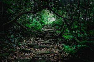 Khám phá rừng Tam Đảo, 5 nam nữ bị nhóm người chặn đường hành hung cướp tài sản